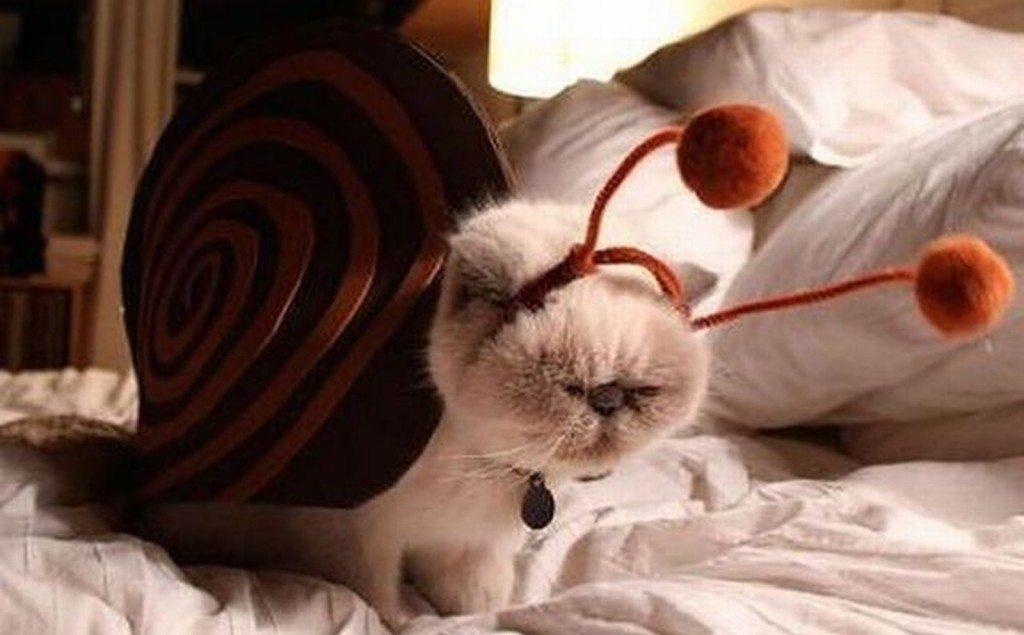 кот в костюме моллюска