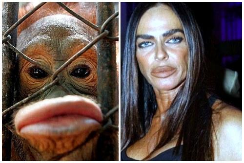 новые губы женщины